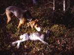 Hund och hare