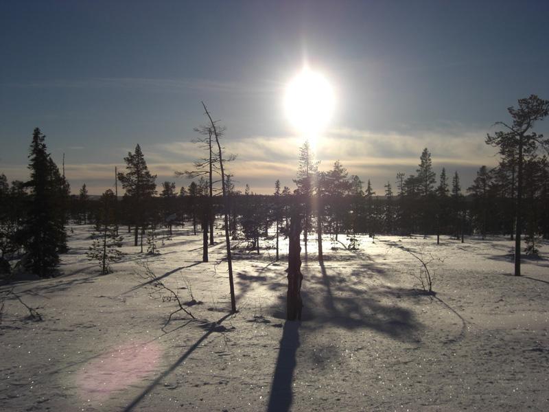 toppfagelmarker-vinter-2007